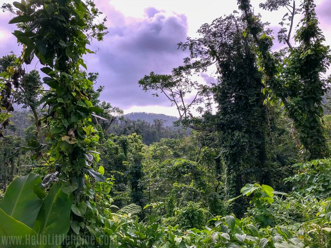 Beautiful views on the Angelito Trail in El Yunque National Forest.