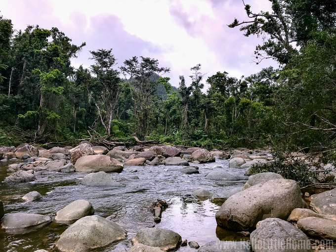 The Angelito Trail ending at the Mameyes River in El Yunque National Forest.