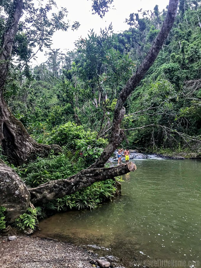A swimming hole surrounded by tropical rainforest at the end of the Angelito Trail in El Yunque.