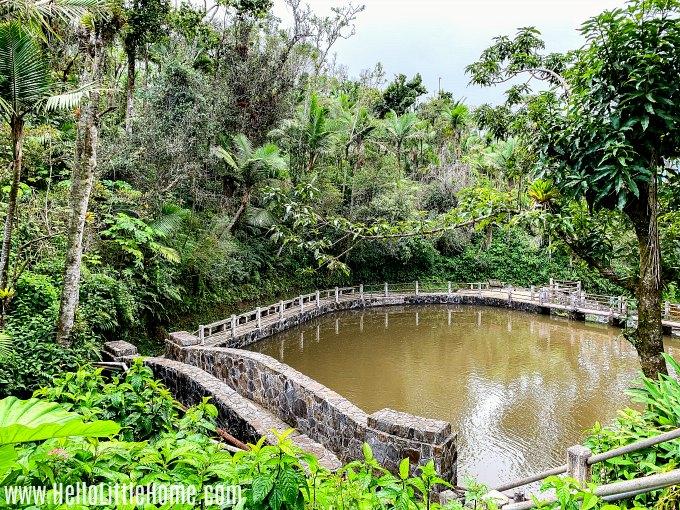 Baño Grande in El Yunque Rainforest