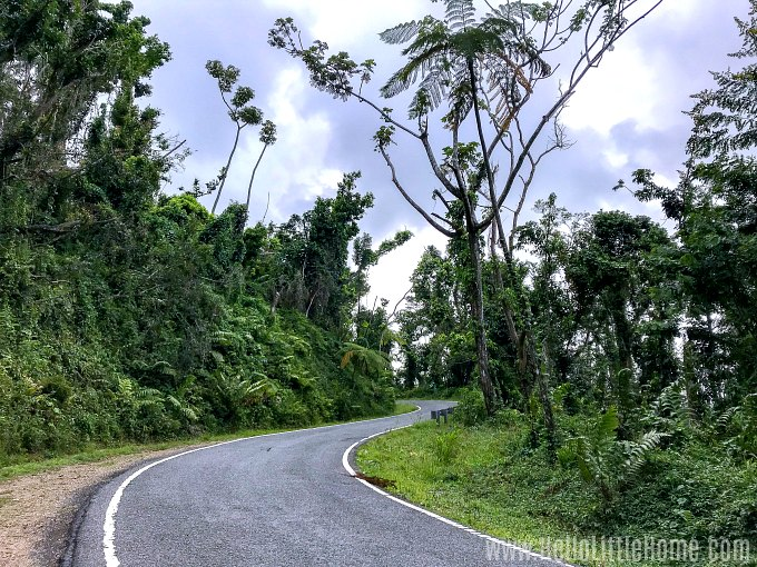 A curvy road in El Yunque Rainforest.