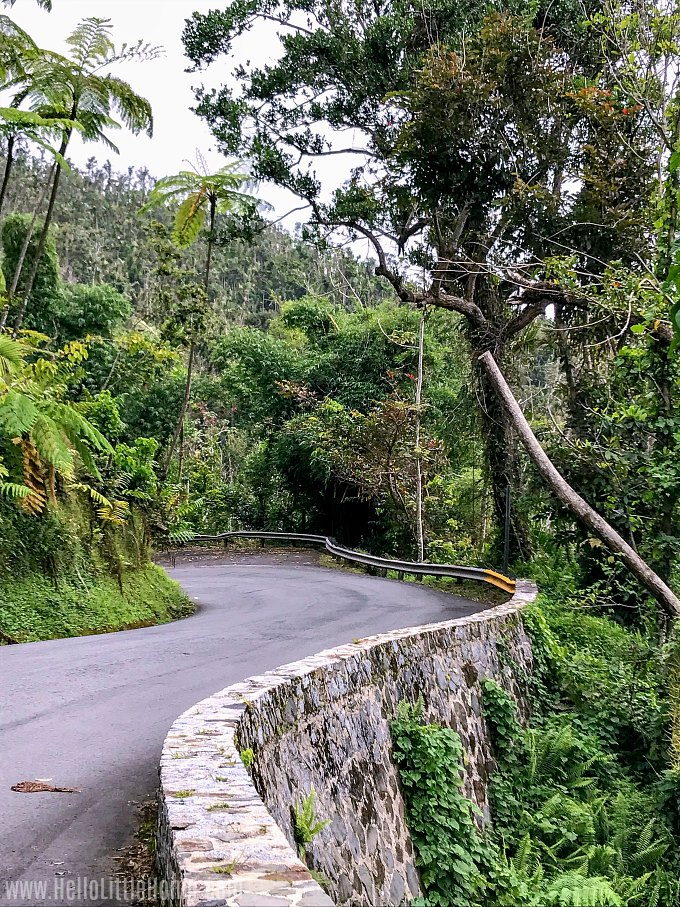 A curvy road near La Coca Falls in El Yunque Rainforest.