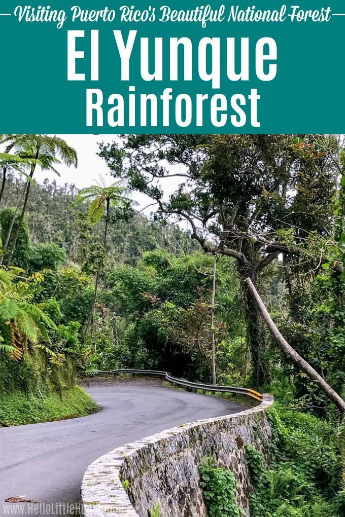 Visit El Yunque Rainforest in Puerto Rico … tons of helpful tips! El Yunque National Forest is the only rainforest in the US National Parks systems. Add it to your Puerto Rico Bucket List! This travel guide has everything you need to visit this tropical rain forest, from things to do in El Yunque (waterfalls, hiking, swimming + more) to tips for visiting El Yunque after Hurricane Maria. | Hello Little Home #elyunque #rainforest #findyourpark #nationalparks #puertorico #discoverpuertorico