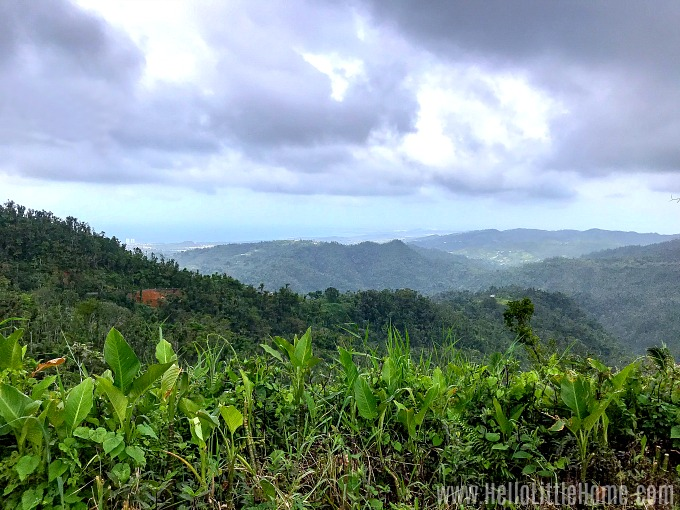 A beautiful view of El Yunque National Rainforest with the ocean in the distance.