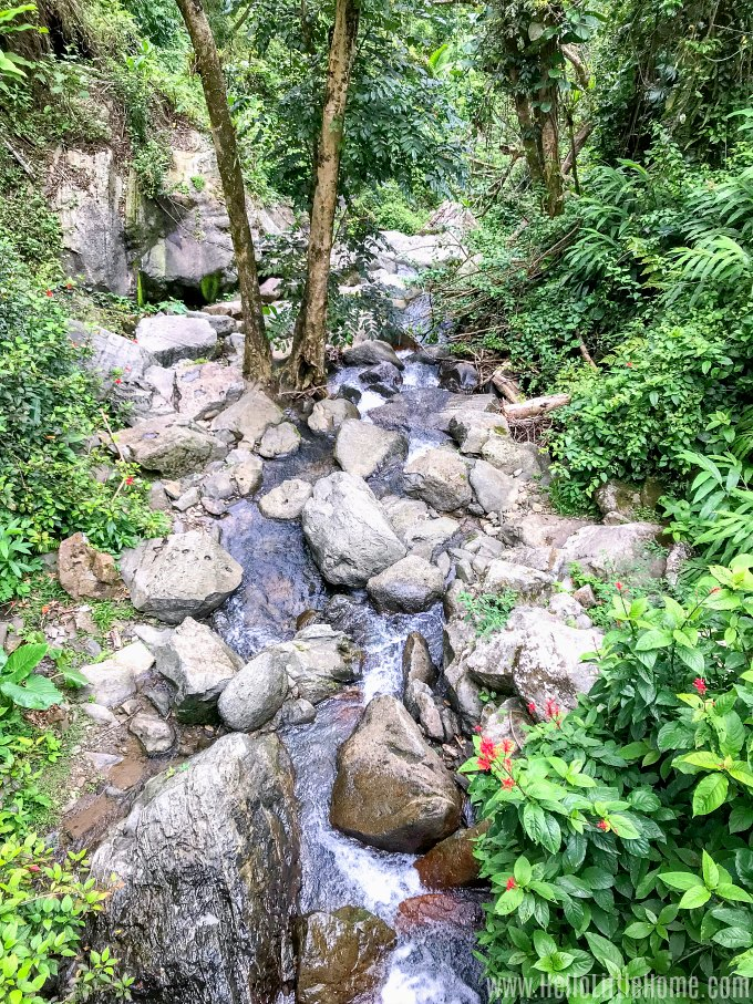 The lower part of La Coca Falls in El Yunque Rainforest.