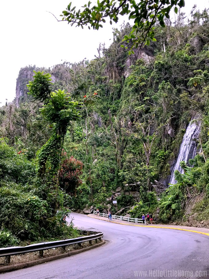The winding road by La Coca Falls in El Yunque National Forest.