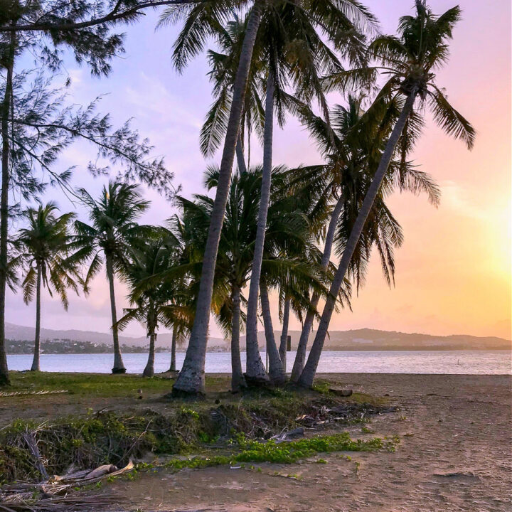 The sun setting between palm trees on the beach in Luquillo, Puerto Rico.