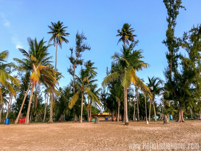 Palm trees on the beach in Luquillo, Puerto Rico.