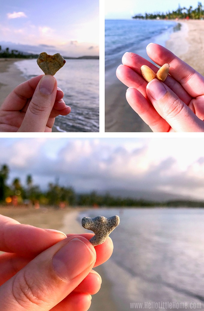 Finding shells, coral, and sharks teeth on Luquillo Beach.