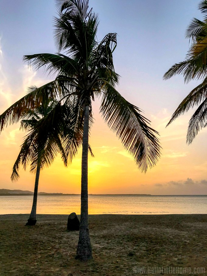 Palm trees and the oceans with a golden sunset Luquillo, Puerto Rico.