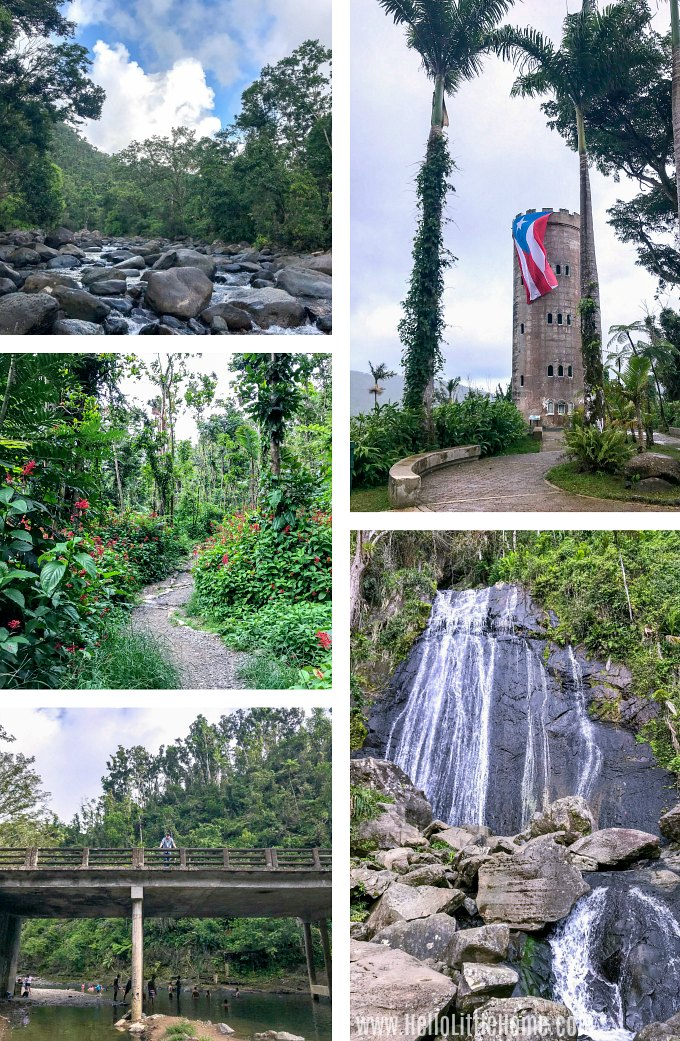 Visting El Yunque Rainforest is one of the best things to do in Luquillo Puerto Rico.