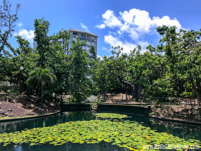 A pond in the Sculpture Botanical Garden at the Museo de Arte de Puerto Rico in San Juan.