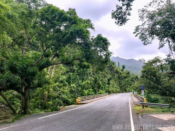 The road running through the Puente Roto area in the Puerto Rico rainforest.
