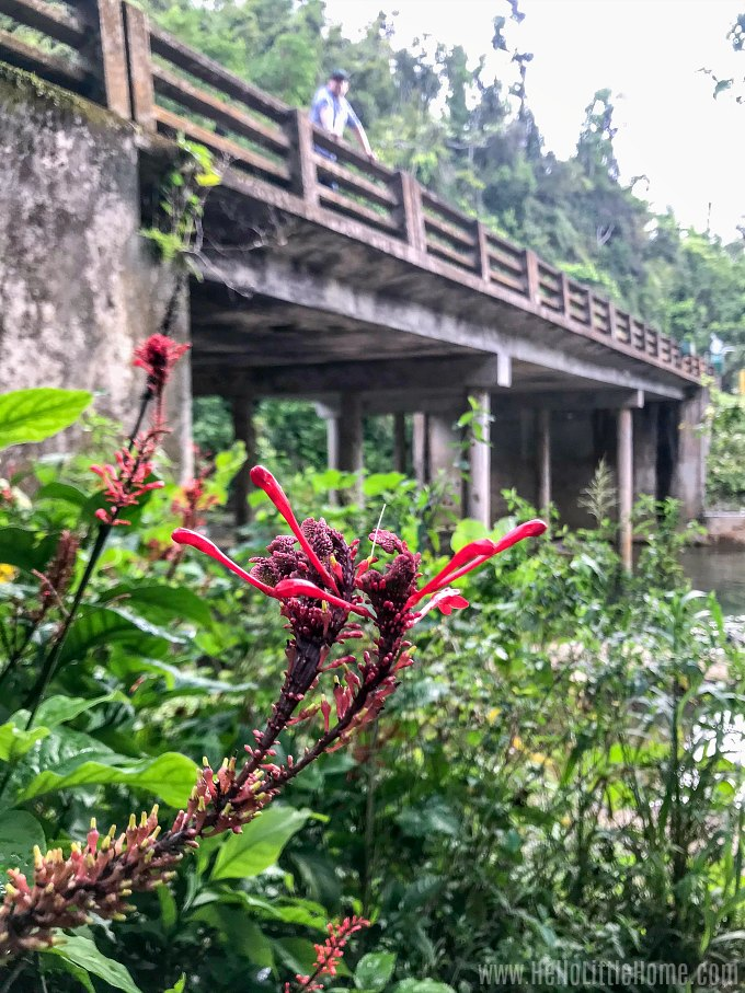 Colorful plants at the Puente Roto day use area in El Yunque.