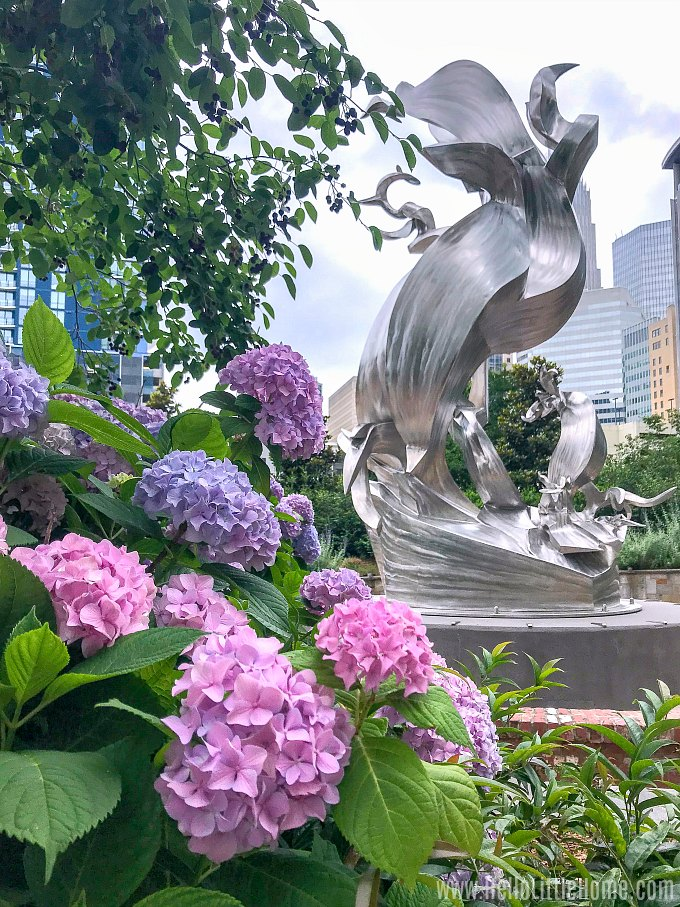 Hydrangea flowers and a sculpture in Romare Bearden Park in Uptown Charlotte.