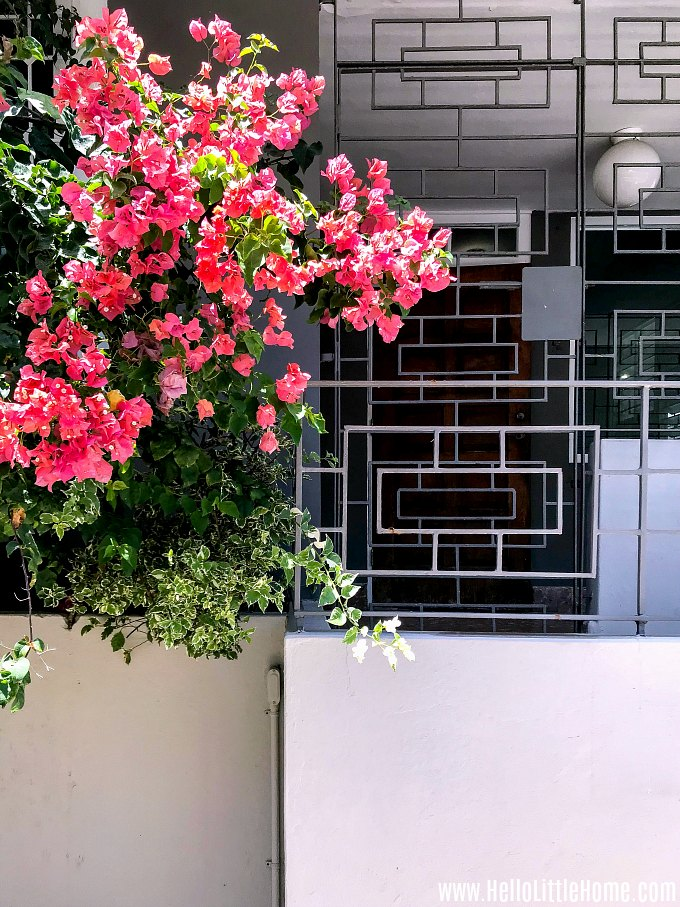 Beautiful architecture and flowers in Santurce, Puerto Rico.