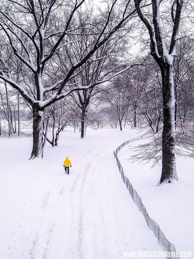 Christmas in NYC: a snowy day in Central Park