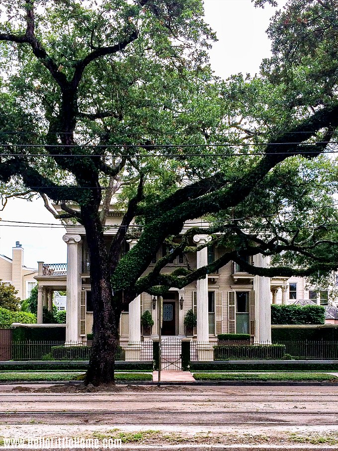 An oak tree in front of a mansion in the Garden District home.