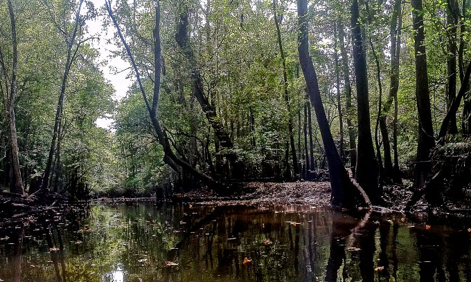 A swamp in Congaree National Park.