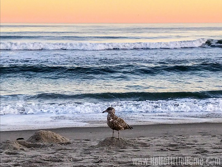 A bird on the beach in the Rockaways during a sunset.
