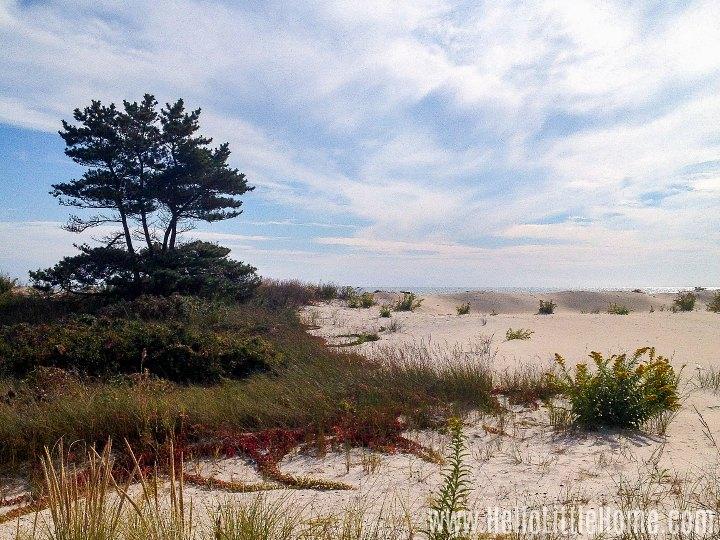 Sand dunes and tree in the Rockaways in Queens.