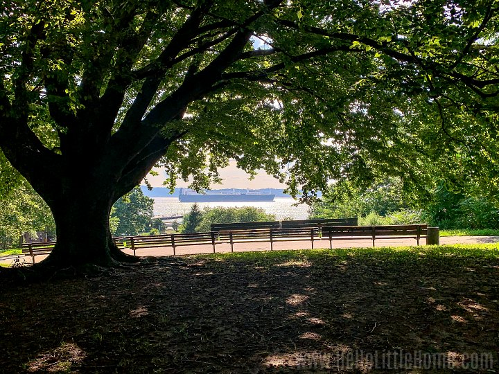 A large tree and benches with a water view in Owl's Head Park, one of the best parks in Brooklyn.