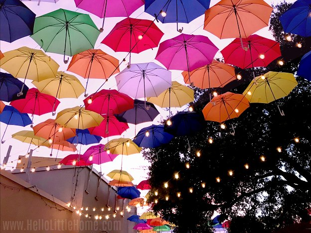 The colorful umbrella canopy in the Texas State Fair Wine Garden.