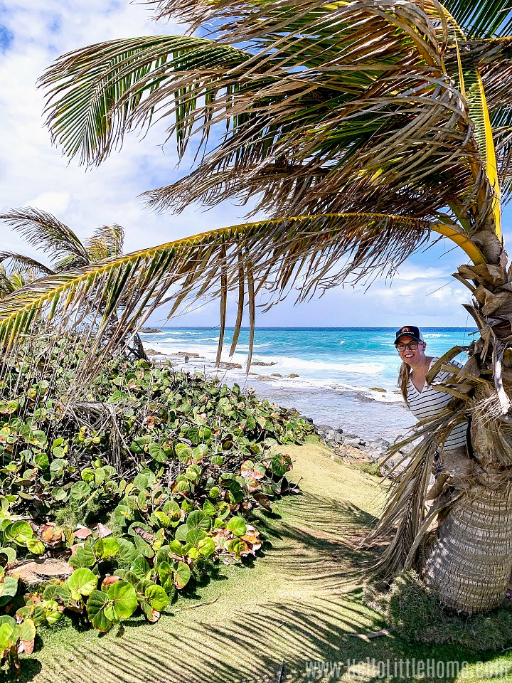 A woman standing behind a palm tree near the ocean.