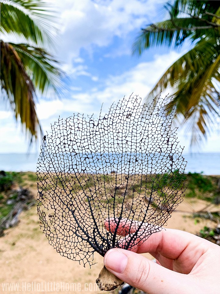 A hand holding a leaf skeleton on a beach in Puerto Rico.