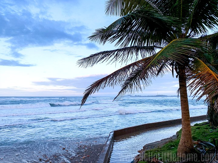 A palm tree with the ocean in the background in Arecibo, Puerto Rico.