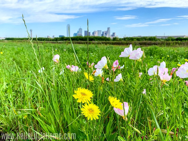 Colorful yellow and pink wildflowers and a grass field with a distant city view.