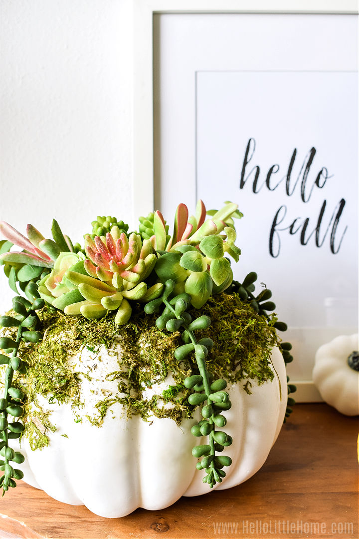 Succulents in a white pumpkin in front of the fall art.