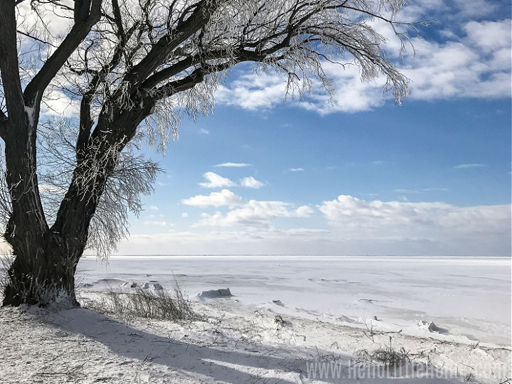A tree with iced branches in front of a frozen lake.