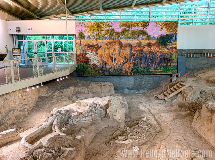 Bones and large painting inside the Dig Shelter at Waco Mammoth National Monument.